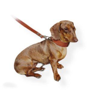 collar perro liso